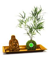 Buddha-Set