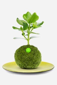 Set Greeny