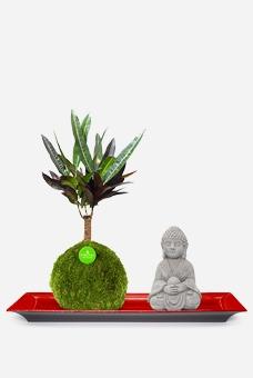 Set Bodhi